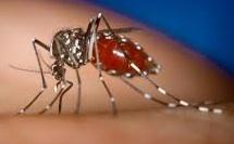 デング熱のデングウイルス